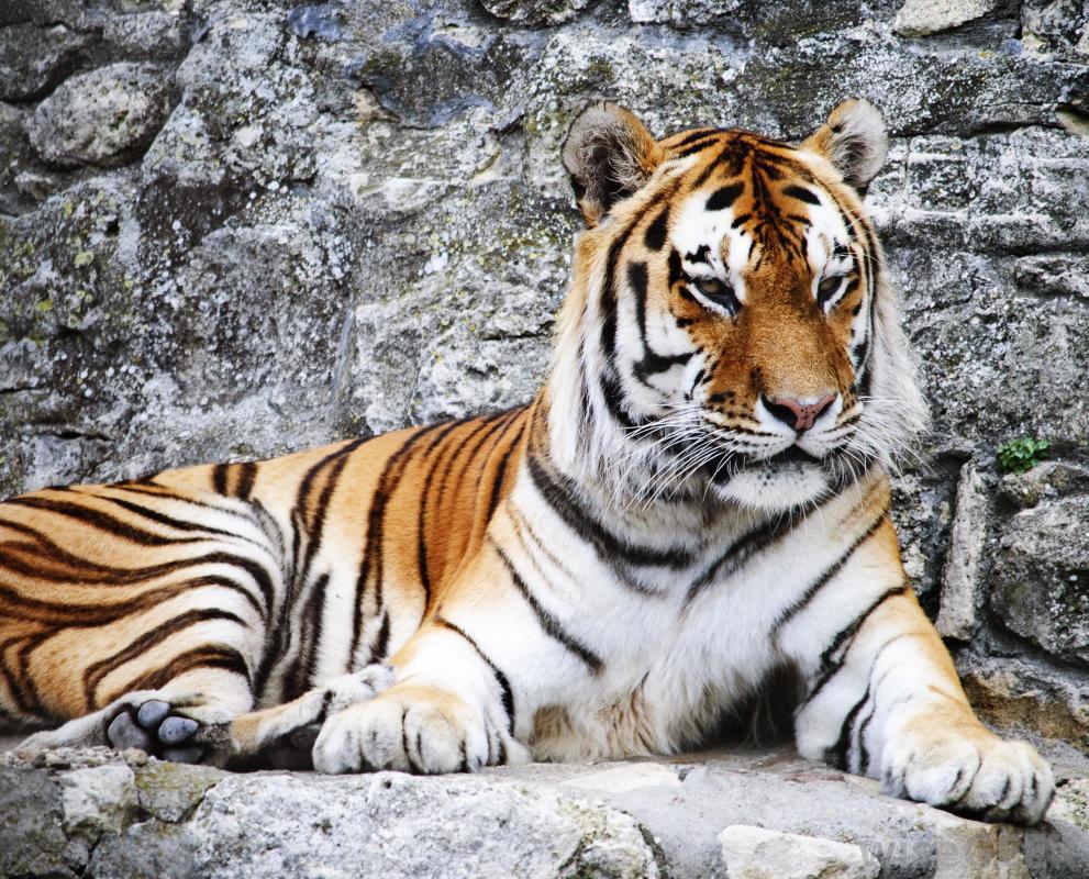 zoology careers zoology